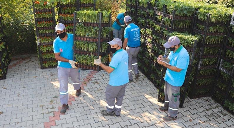 Alanya Belediyesi 21 mezarlıkta 58 bin çiçek dağıtacak
