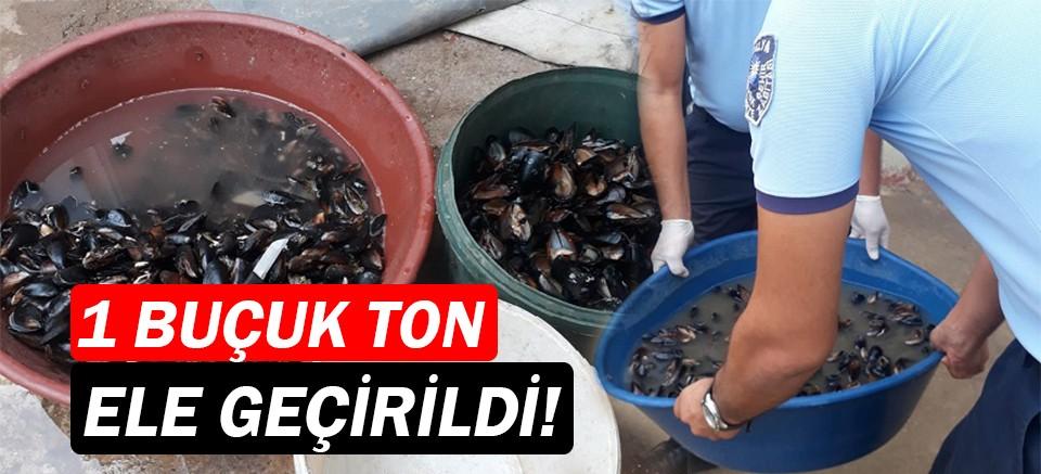 Antalya'da 1.5 tonluk midye operasyonu!