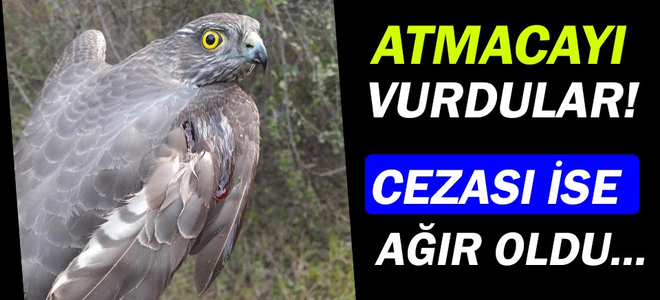 Antalya'da atmacayı vuranlara ağır ceza!