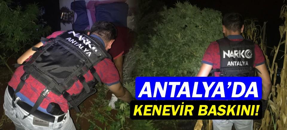 Antalya'da kenevir yetiştiricilerine büyük baskın!