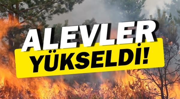 Antalya Manavgat'ta yangın alarmı!