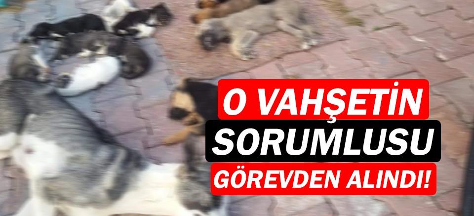 Konyaaltı'ndaki barınak skandalında flaş gelişme!