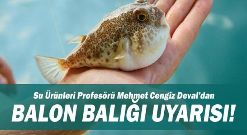 Su Ürünleri Profesörü Mehmet Cengiz Deval'dan Balon Balığı Uyarısı