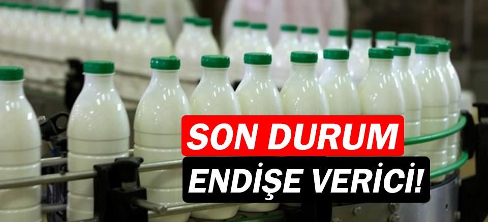 Süt ve süt ürünleri üretiminde düşüş sürüyor!